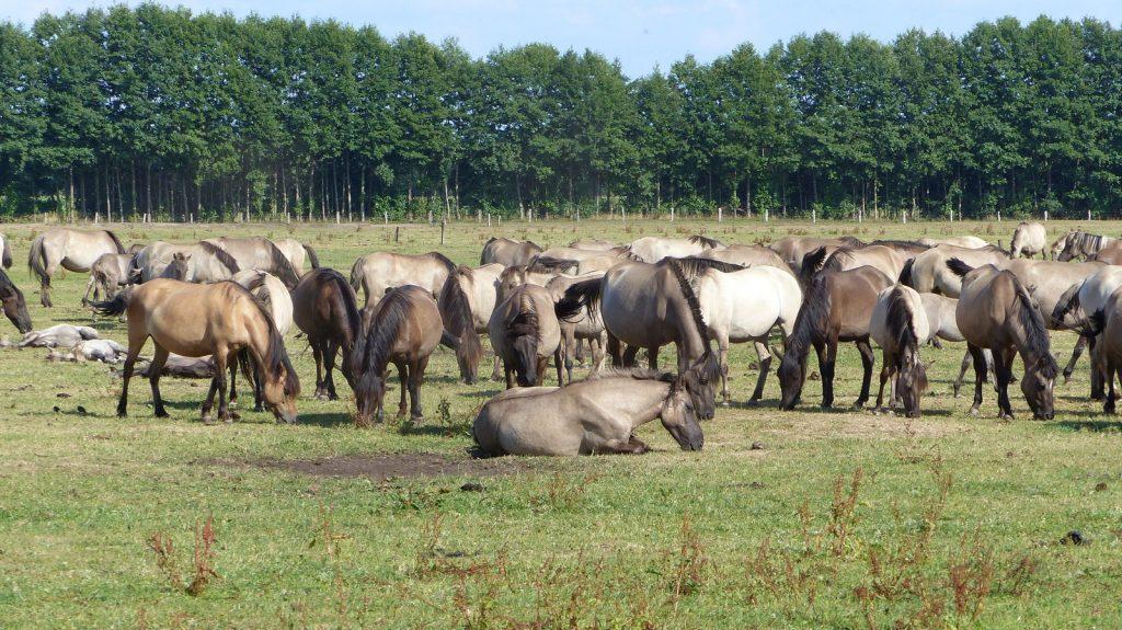 Foto Pferde